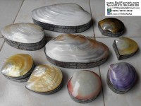 Sea Shell Trinket Boxes from Bali Indonesia